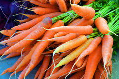 Bunches of Carrots. Fresh Carrots at the farmers market Royalty Free Stock Photography