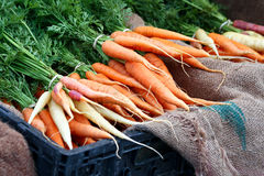 Bunches of Carrots royalty free stock photo