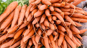 Bunches of carrots Royalty Free Stock Image