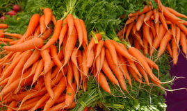 Bunches of Carrots. Bunches of organic carrots at farmers market with green tops Stock Photos