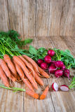 Bunches of carrots and radishes Stock Image