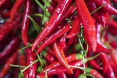 Bunches of chilli peppers hanging at the market royalty free stock image