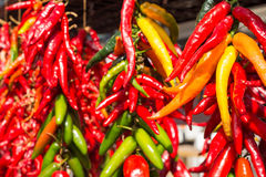 Bunches of chilli peppers Royalty Free Stock Image