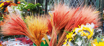 Bunches of Colored Wheat Royalty Free Stock Photo