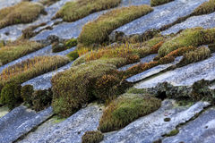 Bunches of colorful moss Royalty Free Stock Image