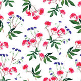 Bunches and cornflower watercolor seamless vector print Royalty Free Stock Photography