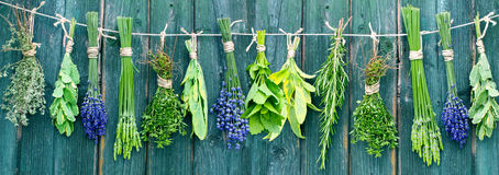 Bunches of different herbs Stock Photography