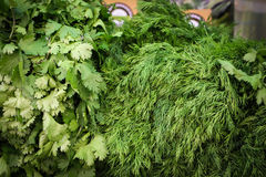 Bunches of dill and parsley Stock Images