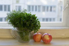 Bunches of dill and parsley in a jar Royalty Free Stock Photos