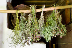 Bunches of healing herbs. Bunches of dried healing herbs royalty free stock photos