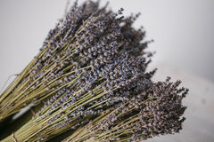 Bunches of dried lavender in backet on wooden background Stock Image