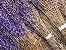 Bunches of dried lavender Stock Photography