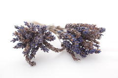 Two bunches of dried lavender on a white background Royalty Free Stock Photography
