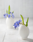 Bunches of  early spring   flowers Stock Images