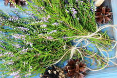 Bunches of erica Stock Images