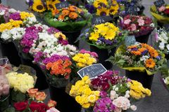Bunches of Flowers Royalty Free Stock Image