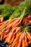 Bunches of fresh carrots. On a display at farmers market, shallow DOF Royalty Free Stock Images