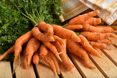 Bunches of fresh carrots Royalty Free Stock Photos