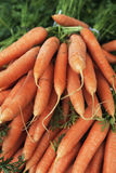 Bunches fresh carrots in farmers market Stock Photography