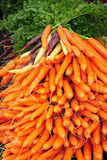 Bunches of fresh carrots. At market Stock Photography