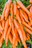 Bunches of fresh carrots at the market Stock Images