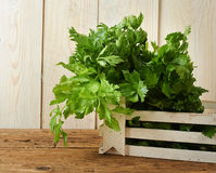 Bunches of fresh celery on wooden bench Stock Image