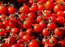 Bunches of fresh cherry tomatoes Stock Image