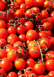 Bunches of fresh cherry tomatoes Stock Photo