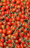 Bunches of fresh cherry tomatoes Royalty Free Stock Photos