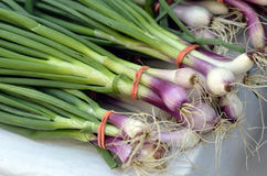 Bunches of fresh green onions Royalty Free Stock Images