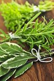 Bunches of fresh herbs Stock Photo