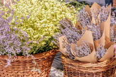 Bunches of fresh lavender Stock Photos