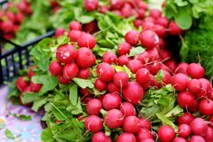 Bunches of fresh radish sold on farmer`s market. Bunches of fresh organic radish sold on farmer`s market Stock Images
