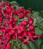 Bunches of Fresh Radishes Stock Photo
