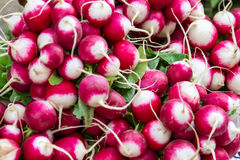 Bunches of fresh radishes at market. Bunches of fresh radishes for salads at market or in a supermarket in a close up full frame view Royalty Free Stock Images