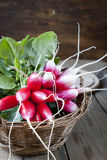 Bunches of fresh radishes in a wicker basket on a wooden table Royalty Free Stock Image