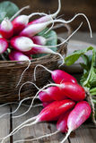 Bunches of fresh radishes in a wicker basket on a wooden table Royalty Free Stock Photo