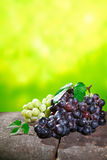 Bunches of fresh grapes Royalty Free Stock Image