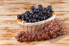 Bunches of fresh ripe blue grapes in wicker basket on piece of sackcloth on a wooden textured backdrop. Beautiful background with royalty free stock images