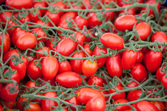 Bunches of fresh ripe red cherry tomatoes close-up. Bunches of fresh ripe red cherry tomatoes plum shape close-up Stock Images