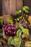Bunches of fresh ripe red grapes on a wooden textural background.  Royalty Free Stock Images