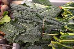 Tuscan Kale. Bunches of fresh Tuscan kale for sale in the market stock photography