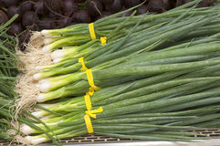 Bunches of Freshly Cut Green Onions on Display in a Farmers Market Royalty Free Stock Photo
