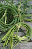 Bunches of freshly picked garlic scape at the farmers market Royalty Free Stock Photography