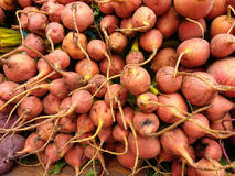 Bunches of Golden Beets Stock Image