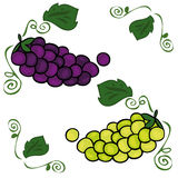 Bunches of grapes. vector illustration