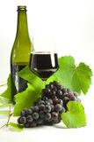 Bunches of grapes. Bunches of black grapes and vine leaves Stock Image