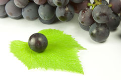 Bunches of grapes. Bunches of black grapes and vine leaves Stock Photography
