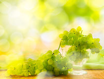 Bunches grapes glare sun Royalty Free Stock Image