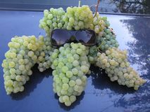 Bunches of grapes, incredibly beautiful stock photography